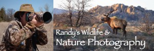 Randy's Wildlife and Nature Photography